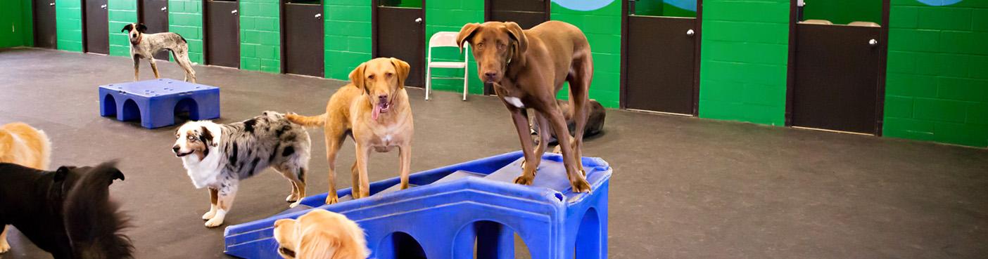 การฝึกสุนัข Noblesville